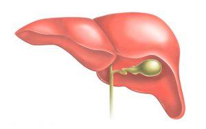 Применение димексида при нарушениях функции печени